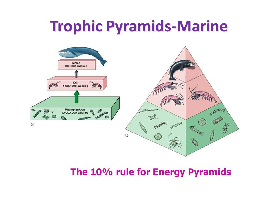 Trophic Pyramids-Marine