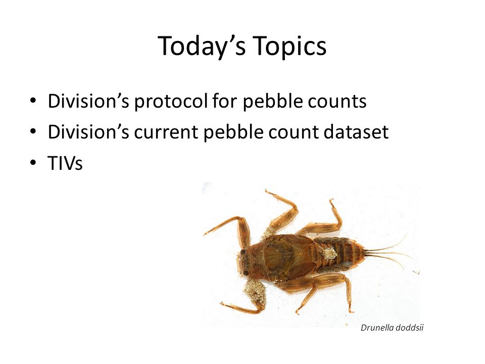 Today's Topics Division's protocol for pebble counts