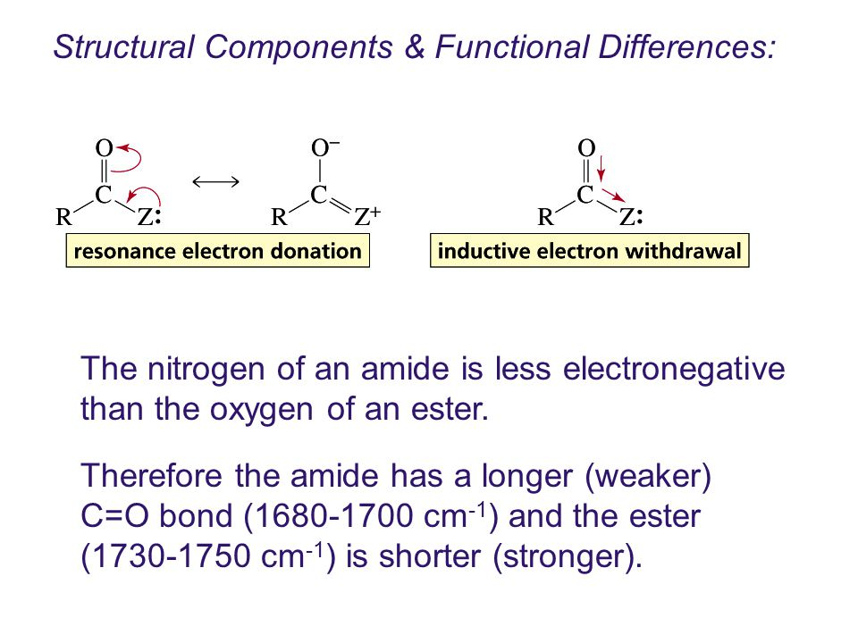Structural Components & Functional Differences: