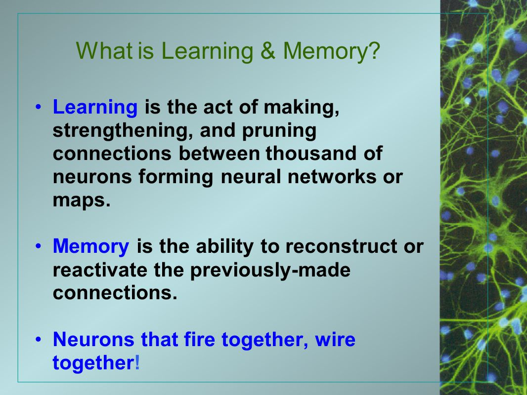 What is Learning & Memory