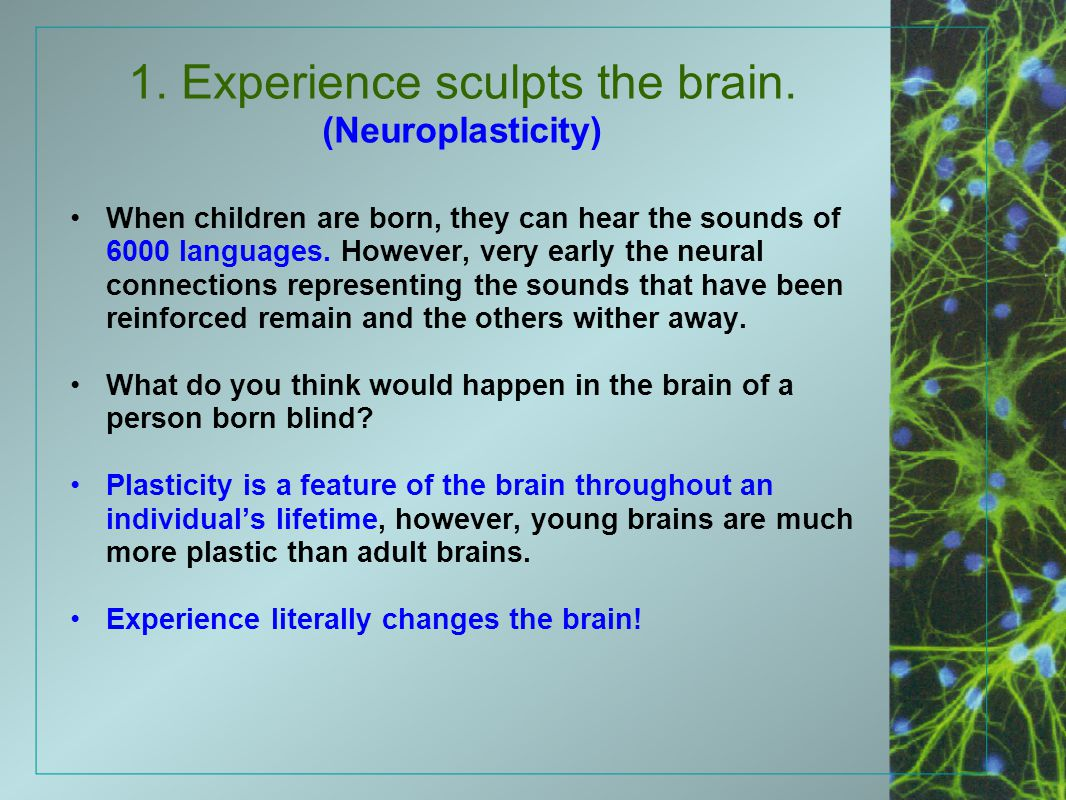 1. Experience sculpts the brain. (Neuroplasticity)
