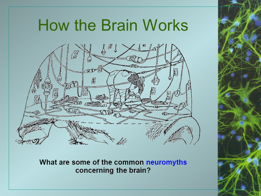 What are some of the common neuromyths