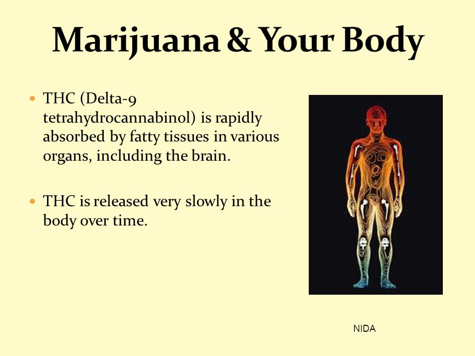 Marijuana & Your Body THC (Delta-9 tetrahydrocannabinol) is rapidly absorbed by fatty tissues in various organs, including the brain.