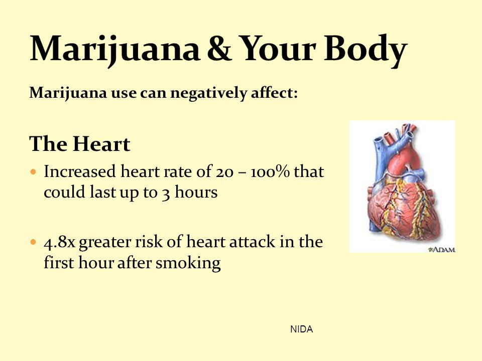Marijuana & Your Body The Heart
