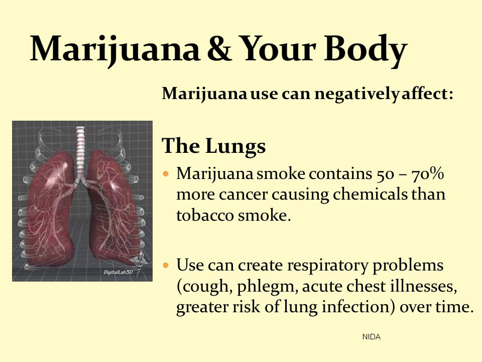 Marijuana & Your Body The Lungs Marijuana use can negatively affect: