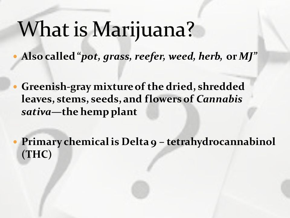 What is Marijuana Also called pot, grass, reefer, weed, herb, or MJ