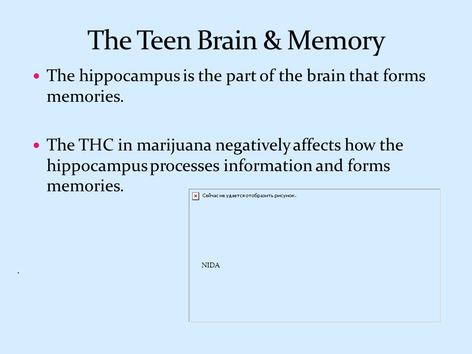 The Teen Brain & Memory The hippocampus is the part of the brain that forms memories.