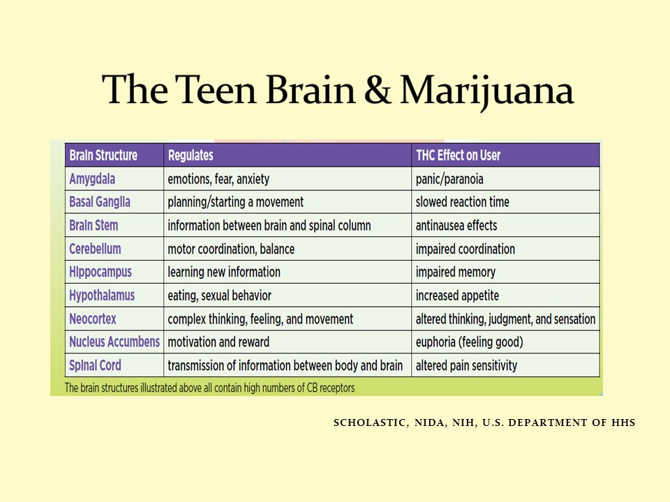 The Teen Brain & Marijuana