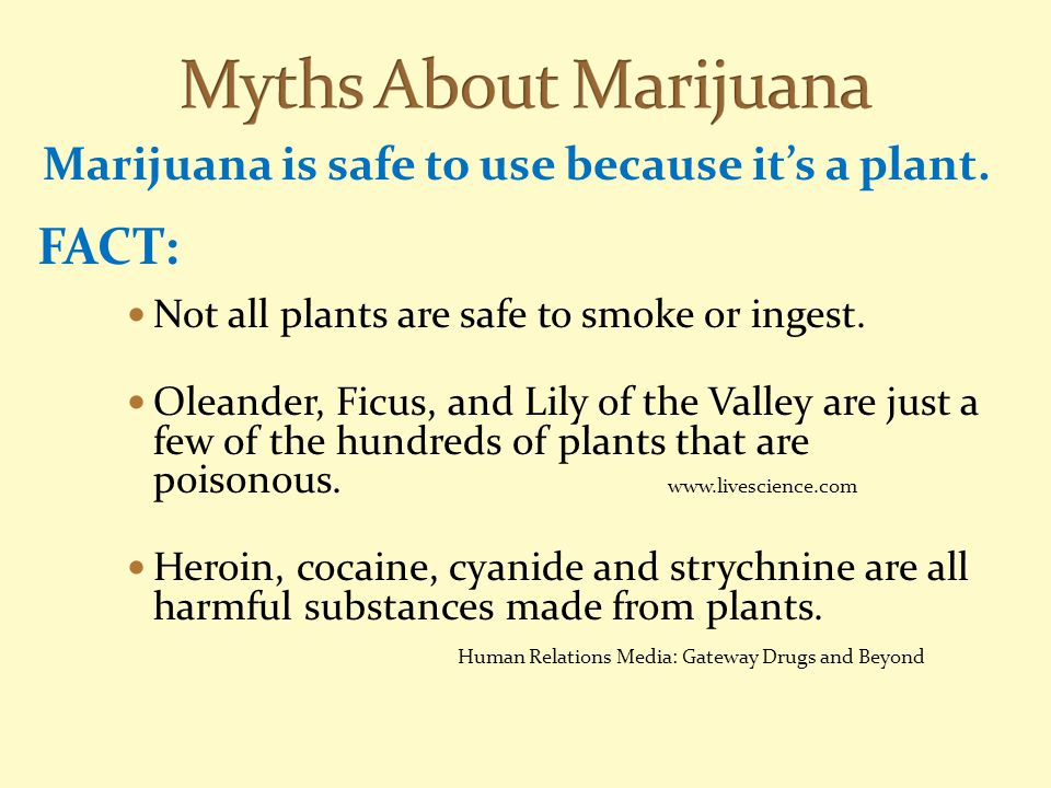 Marijuana is safe to use because it's a plant.