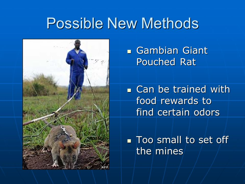 Possible New Methods Gambian Giant Pouched Rat
