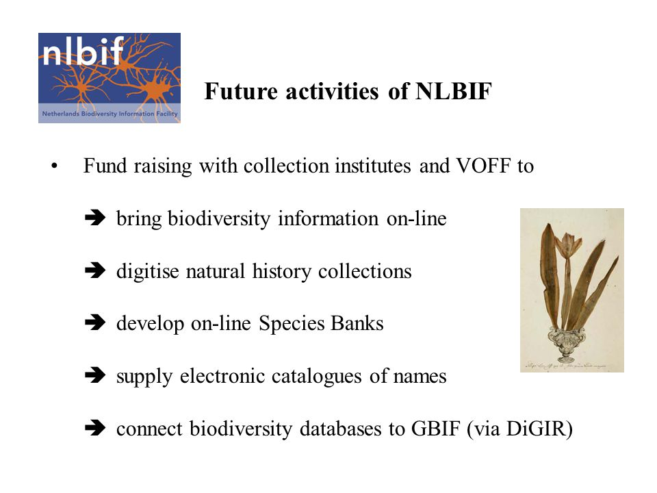 Future activities of NLBIF