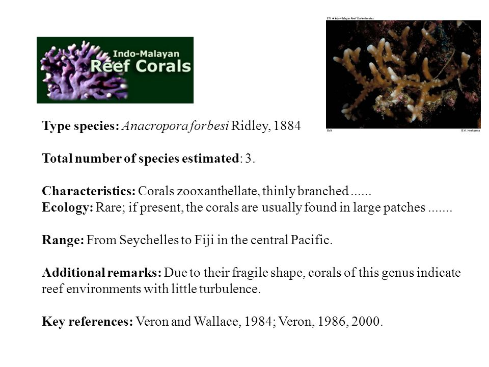 Type species: Anacropora forbesi Ridley, 1884 Total number of species estimated: 3. Characteristics: Corals zooxanthellate, thinly branched ...... Ecology: Rare; if present, the corals are usually found in large patches .......