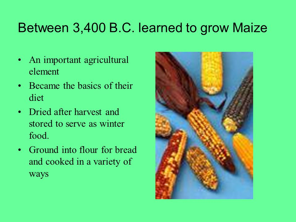 Between 3,400 B.C. learned to grow Maize