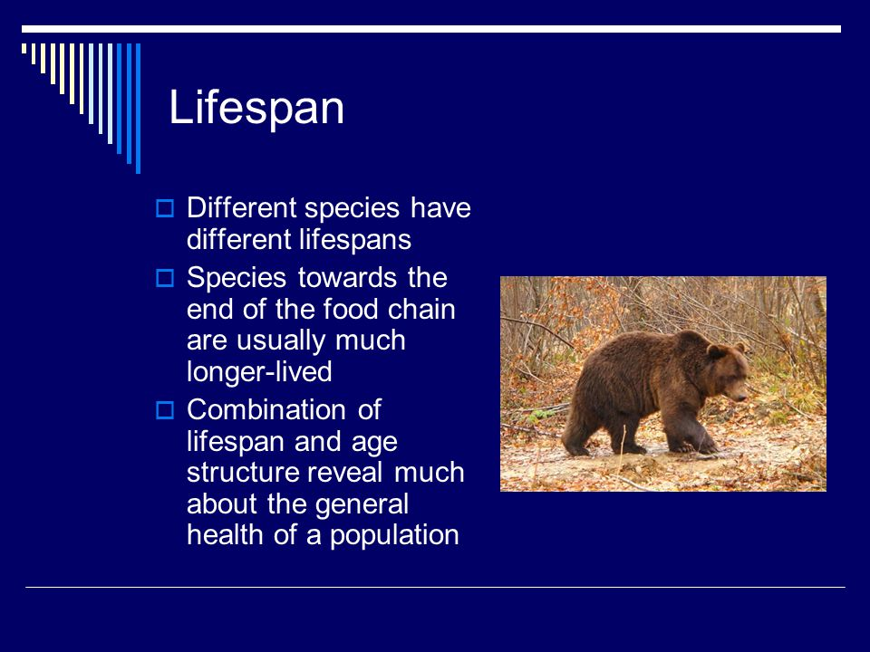 Lifespan Different species have different lifespans