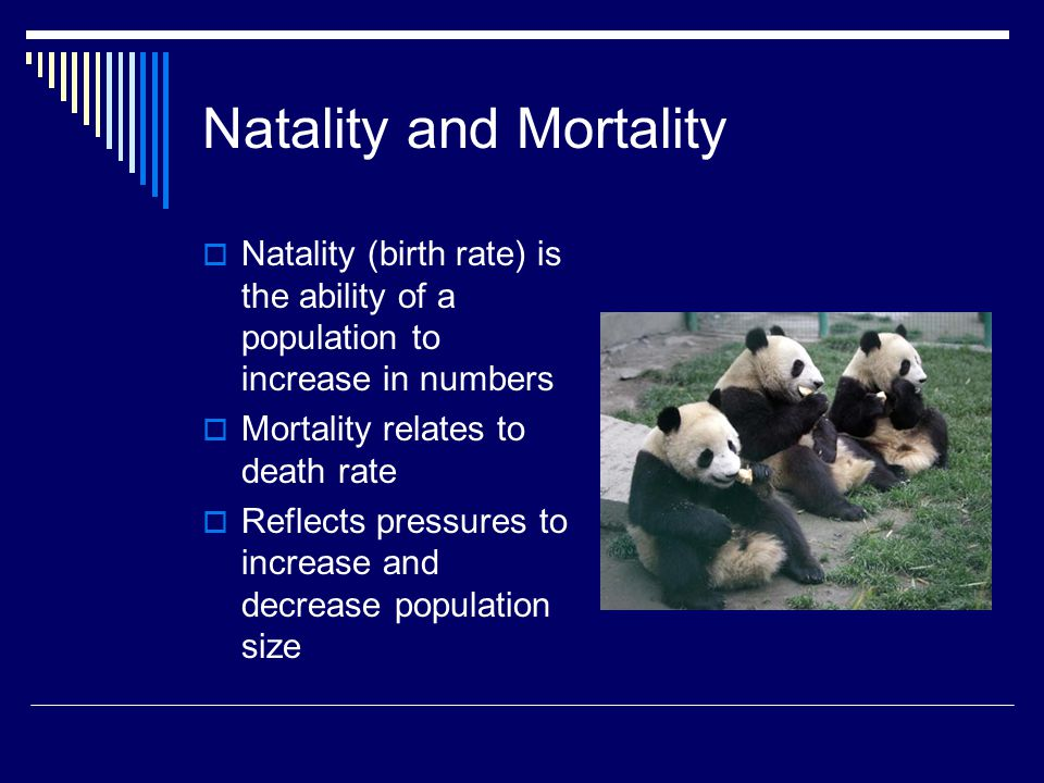 Natality and Mortality
