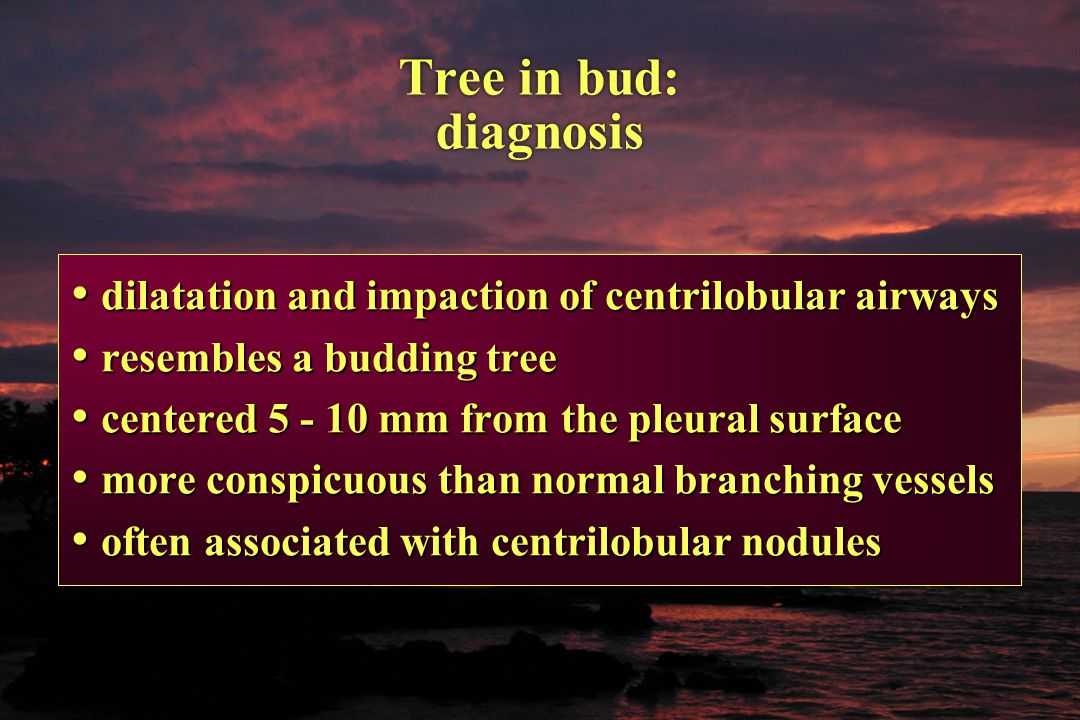 Tree in bud: diagnosis dilatation and impaction of centrilobular airways. resembles a budding tree.