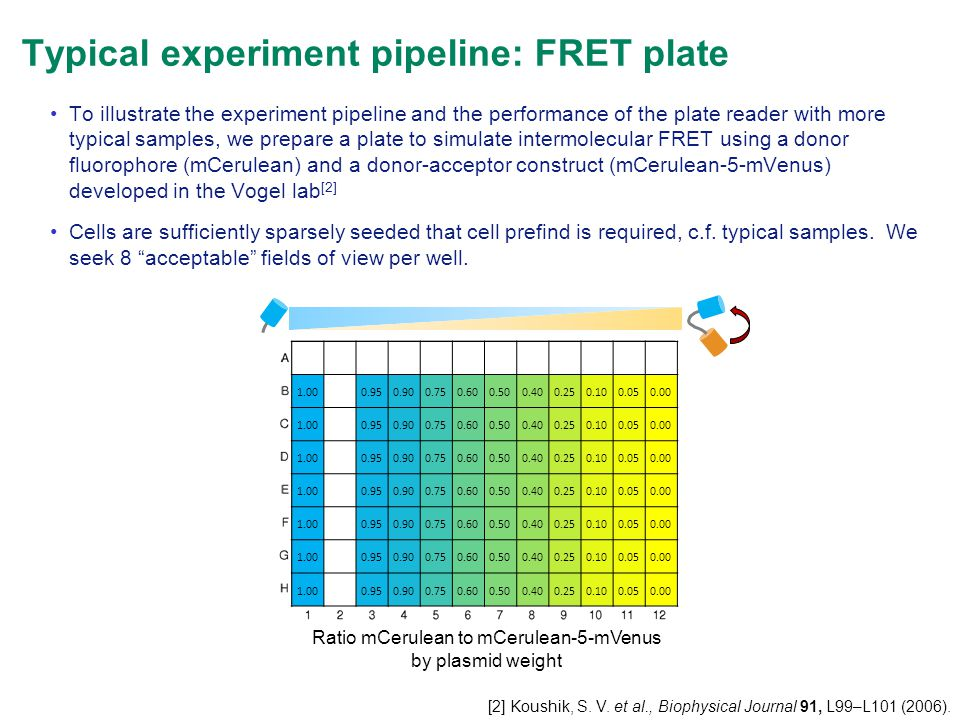 Typical experiment pipeline: FRET plate