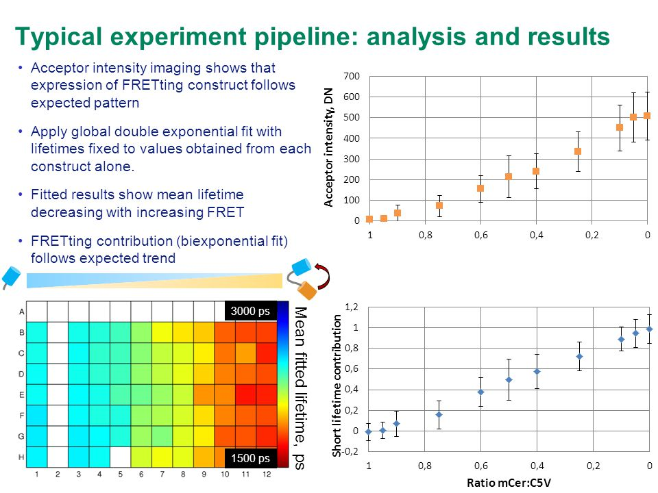 Typical experiment pipeline: analysis and results