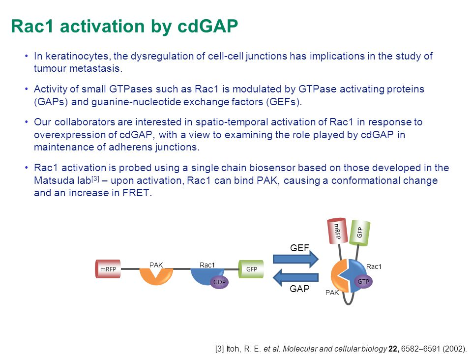 Rac1 activation by cdGAP