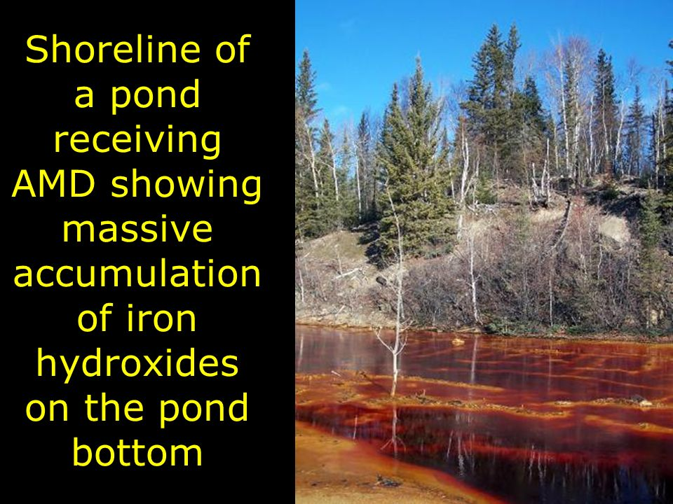 Shoreline of a pond receiving AMD showing massive accumulation of iron hydroxides on the pond bottom