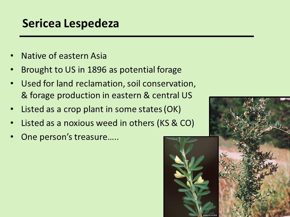 Sericea Lespedeza Native of eastern Asia