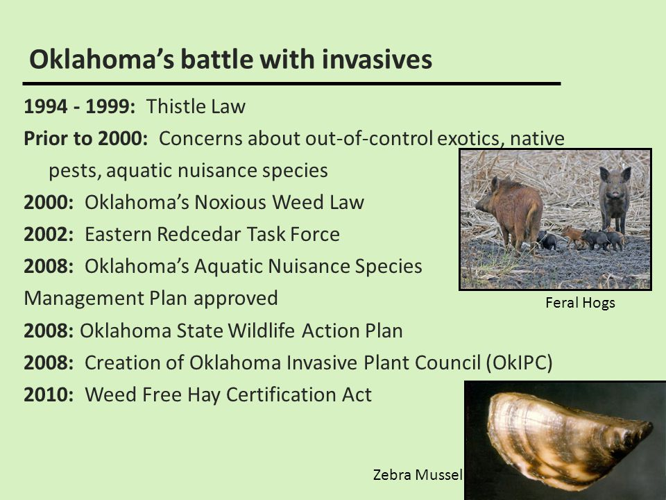 Overview of invasive species in oklahoma ppt video online download 6 oklahomas battle with invasives publicscrutiny Image collections