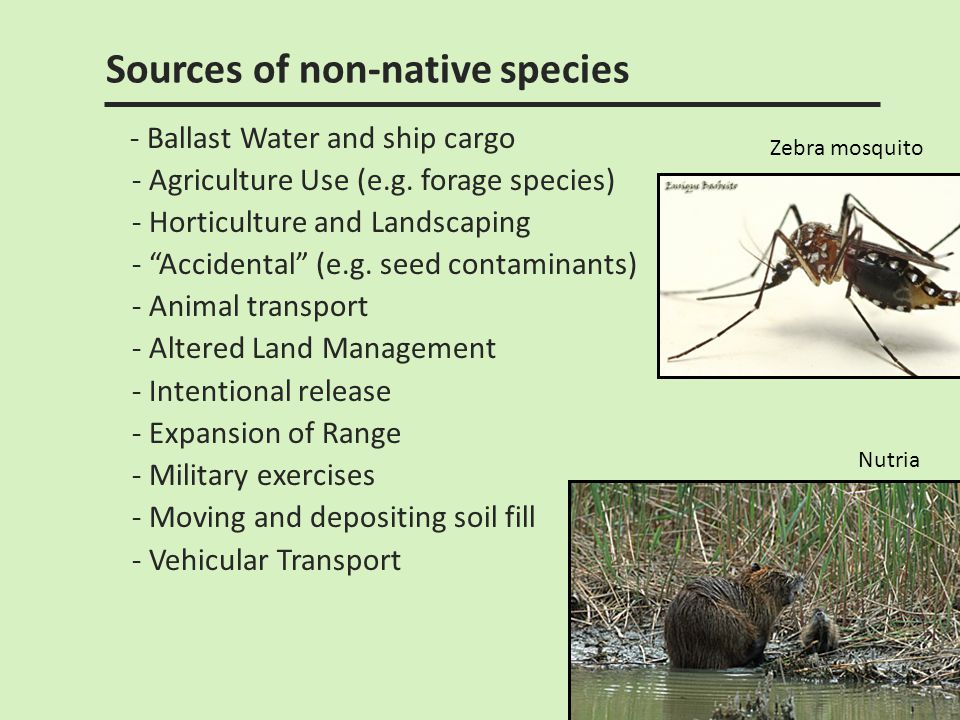 Sources of non-native species