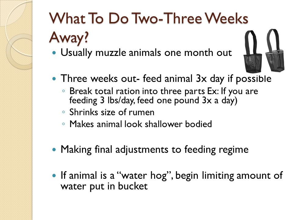 What To Do Two-Three Weeks Away