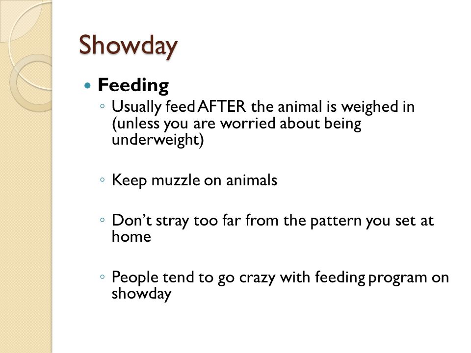 Showday Feeding. Usually feed AFTER the animal is weighed in (unless you are worried about being underweight)