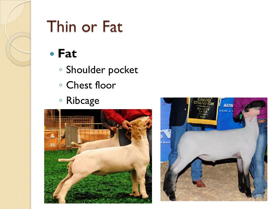 Thin or Fat Fat Shoulder pocket Chest floor Ribcage