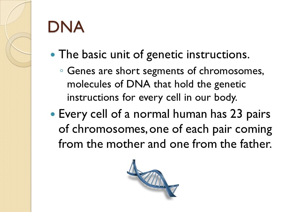 DNA The basic unit of genetic instructions.