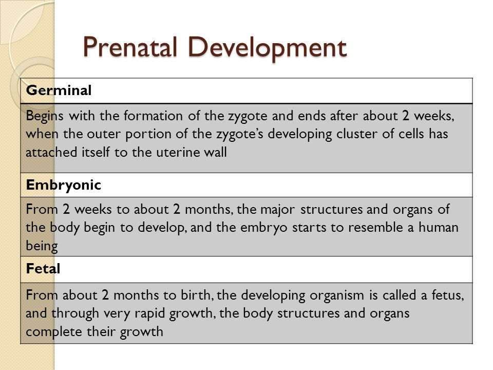 Prenatal Development Germinal