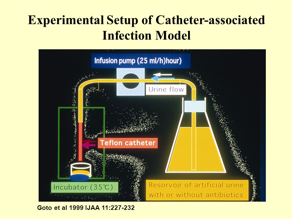 Experimental Setup of Catheter-associated Infection Model