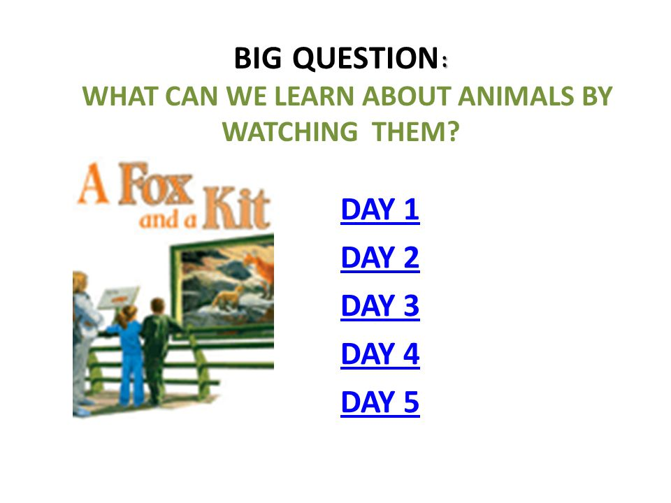 Big Question: What can we learn about animals by watching them
