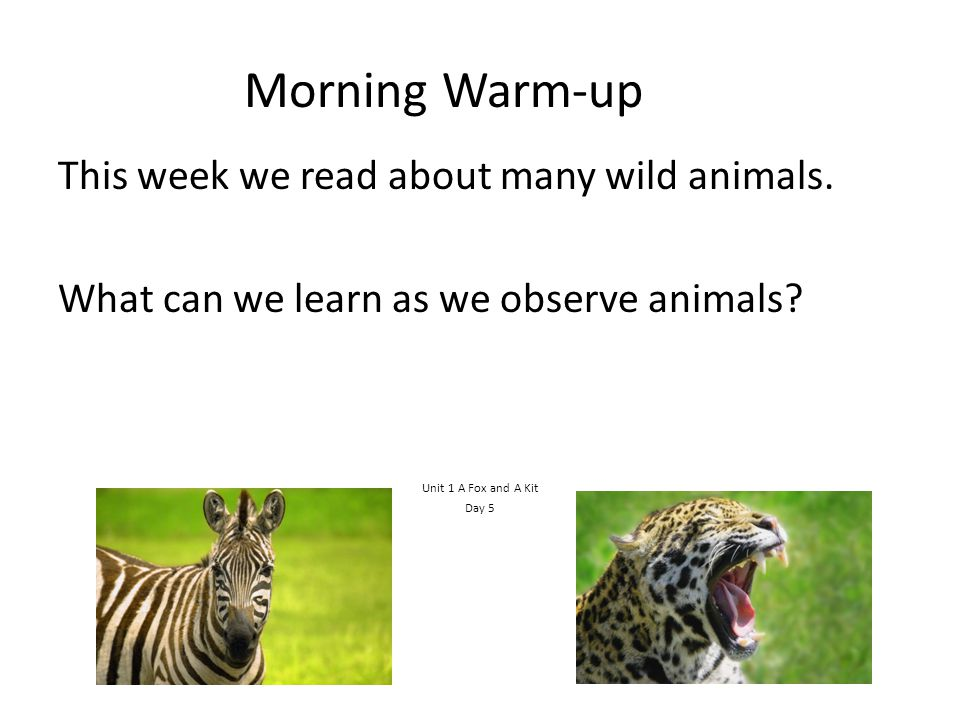 Morning Warm-up This week we read about many wild animals.