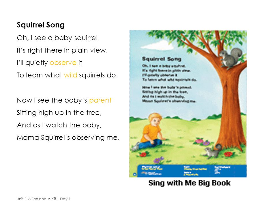 Squirrel Song Oh, I see a baby squirrel