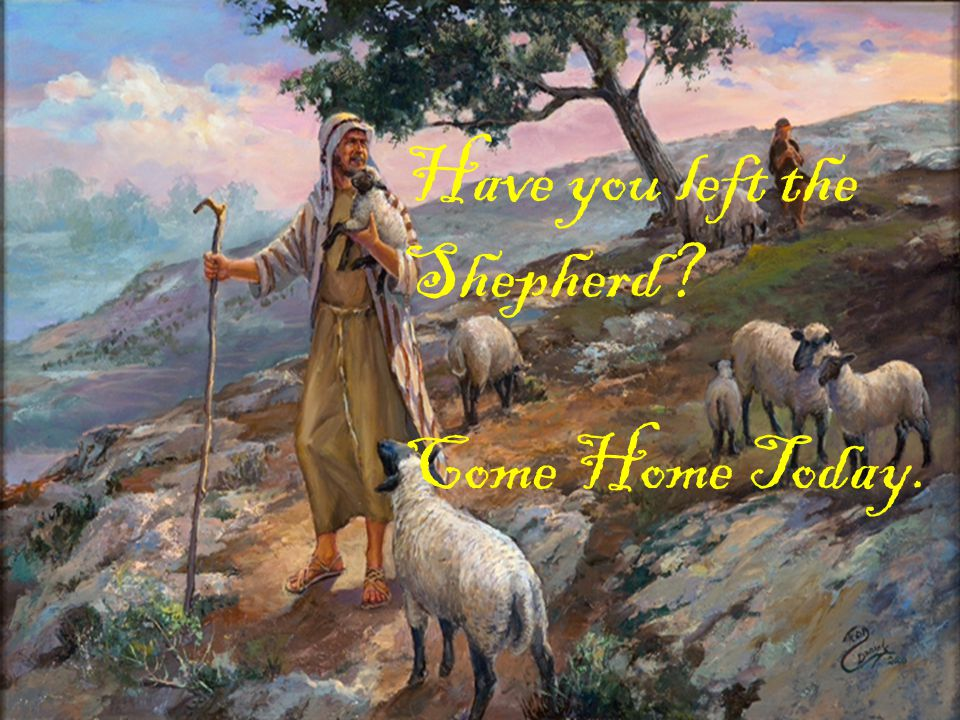 Have you left the Shepherd