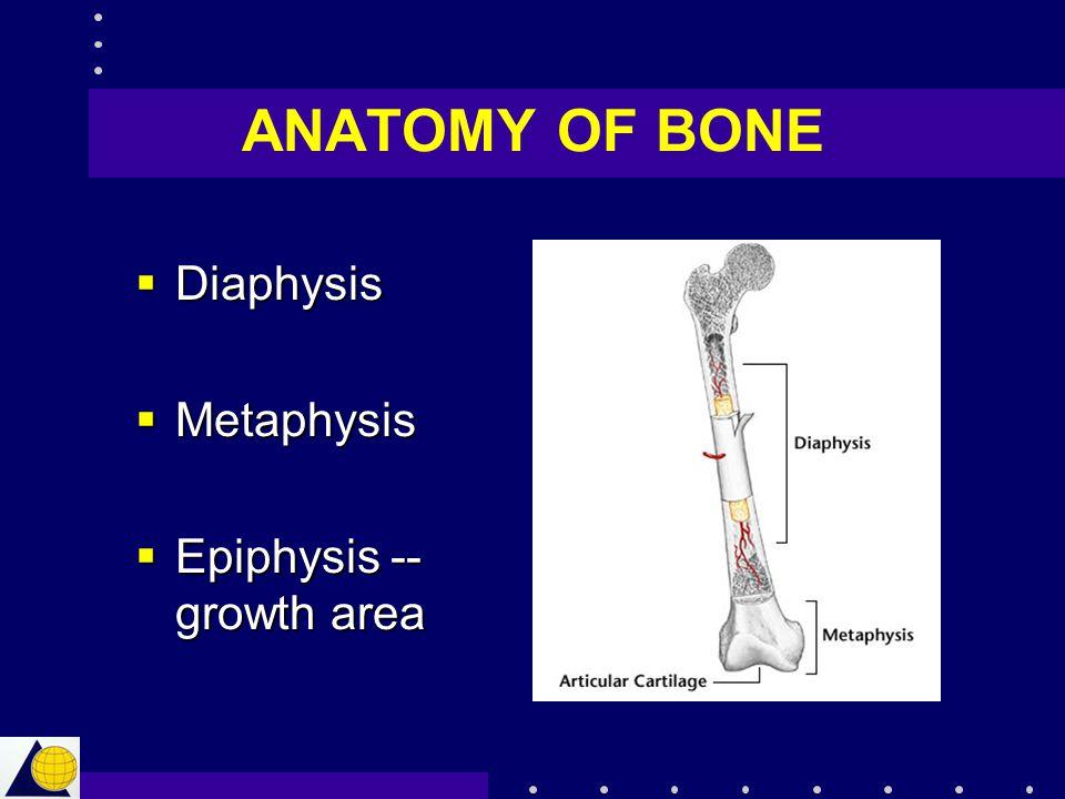 ANATOMY OF BONE Diaphysis Metaphysis Epiphysis -- growth area