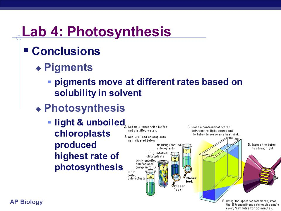 experimenting on the rate of photosynthesis in chloroplasts Some landmark experiments are given in the box below zjoseph priestley (1772) rate of photosynthesis is minimum and in which structure of chloroplast is such that the light dependent (light reaction) and light.