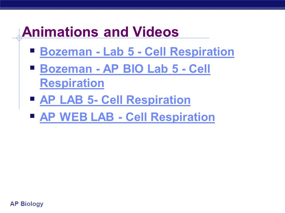 Animations and Videos Bozeman - Lab 5 - Cell Respiration