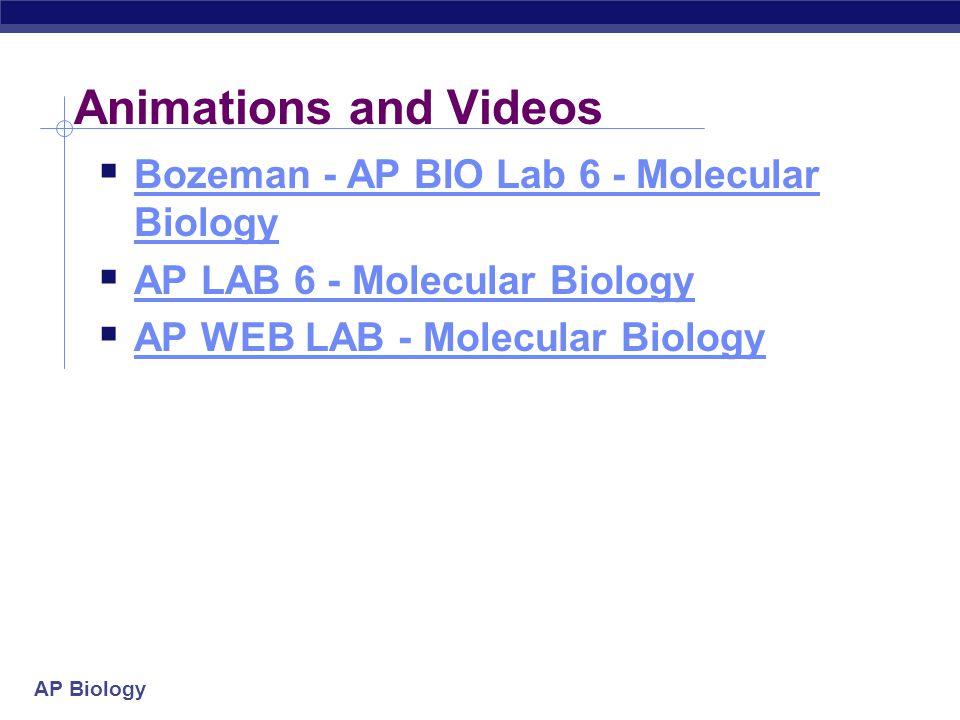 Animations and Videos Bozeman - AP BIO Lab 6 - Molecular Biology