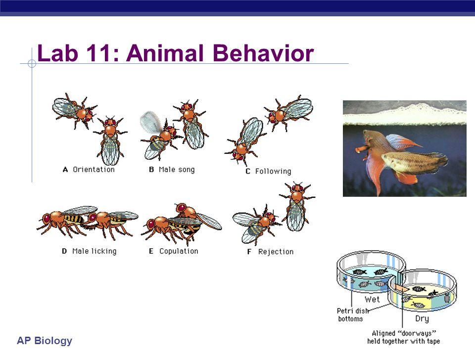 Lab 11: Animal Behavior 2004-2005