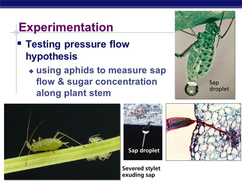 Experimentation Testing pressure flow hypothesis