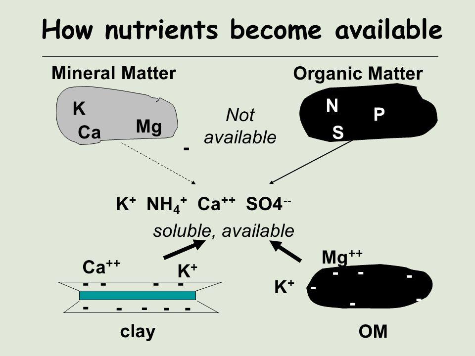Nutrient Anion Availability