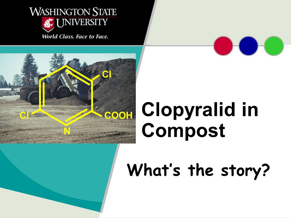 Clopyralid What is it A herbicide that kills many broad-leaved weeds.