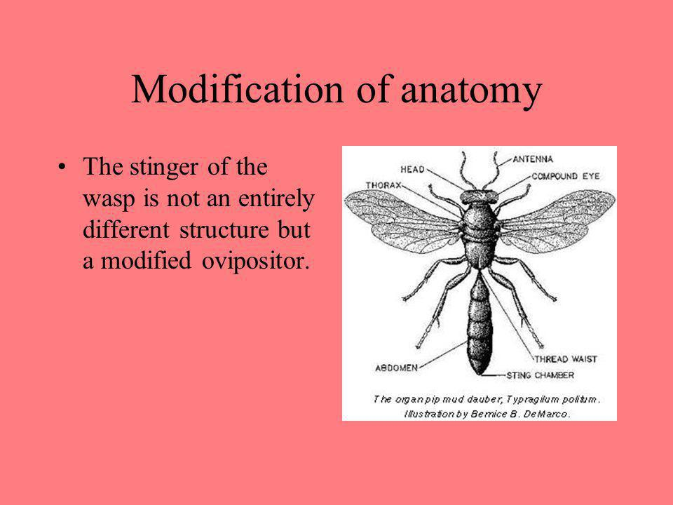 Modification of anatomy