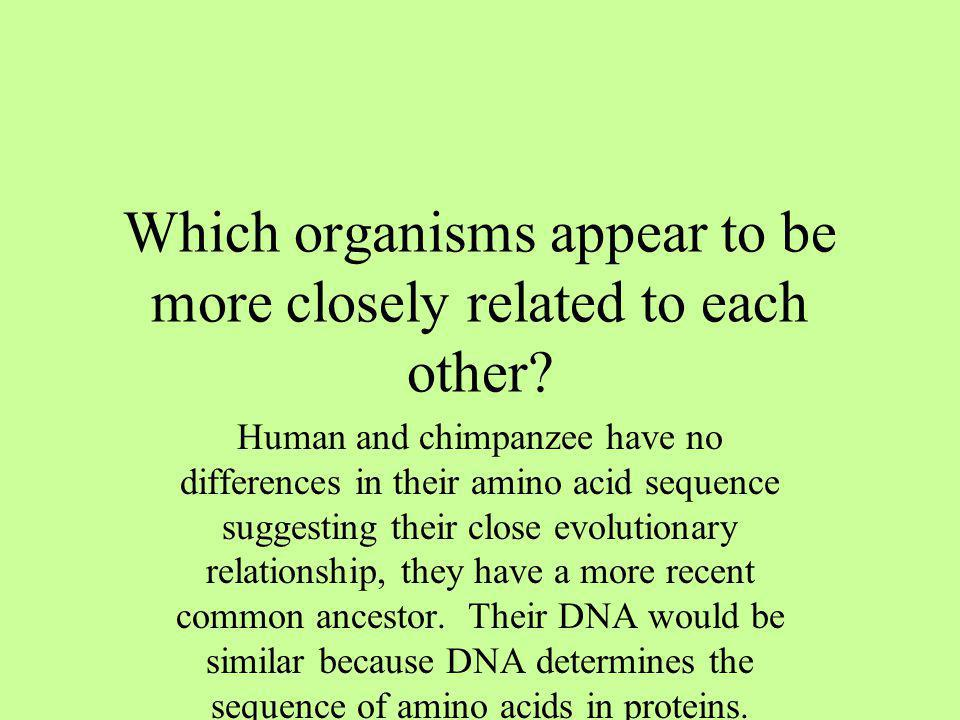 Which organisms appear to be more closely related to each other