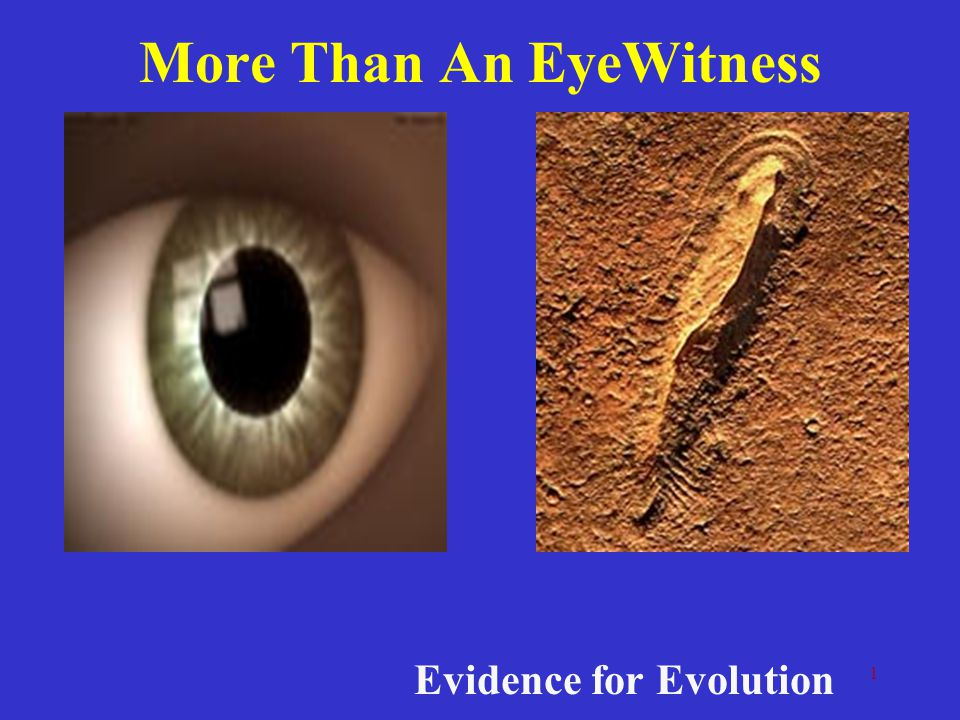More Than An EyeWitness