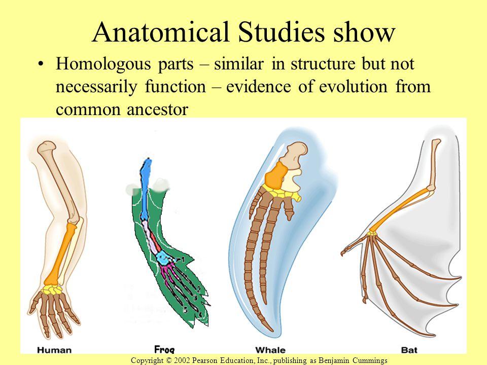 Anatomical Studies show