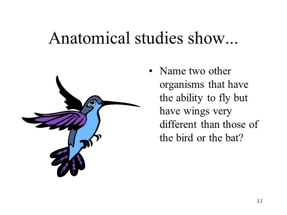 Anatomical studies show...
